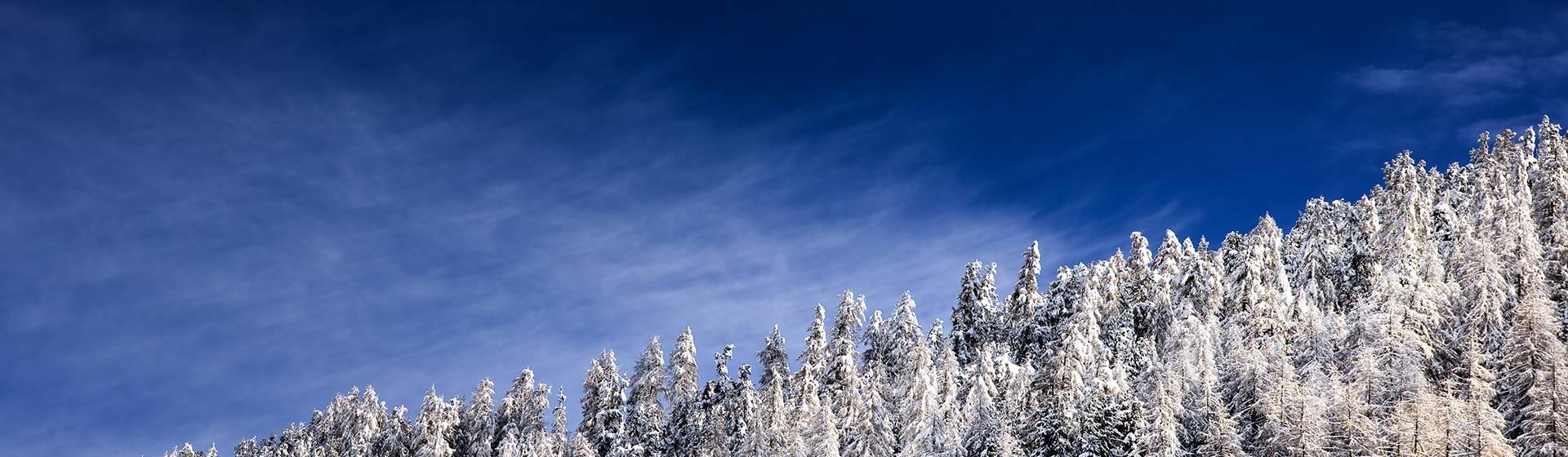 Schneebedeckte Bäume bei blauem Himmel